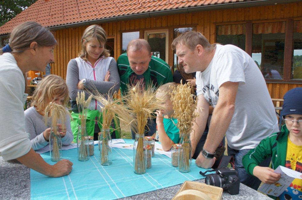 Getreidesorten erkennen