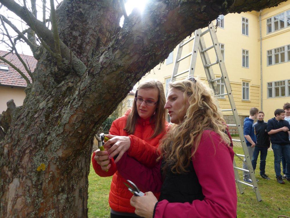 Gerlinde Handlechner erklärt beim Apfelbaum.