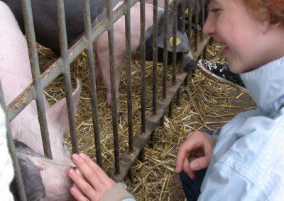 Schweinen begenen
