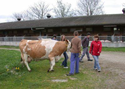Wandern mit Kühen