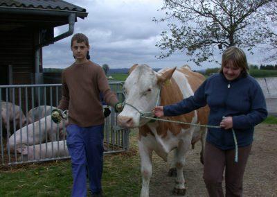 Kühe führen